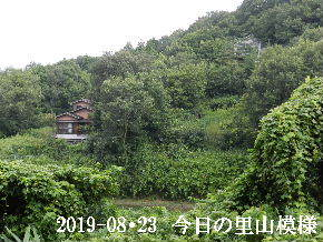 2019-08・23 今日の里山模様・・・ (5).JPG