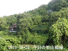 2019-08・24 今日の里山模様・・・ (4).JPG