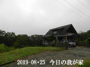 2019-08・25 今日の里山模様・・・ (1).JPG