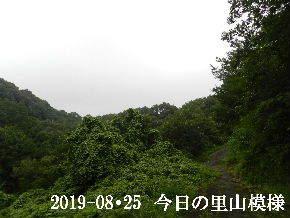 2019-08・25 今日の里山模様・・・ (6).JPG