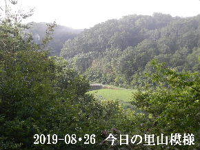 2019-08・26 今日の里山模様・・・ (4).JPG