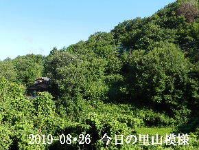 2019-08・26 今日の里山模様・・・ (5).JPG