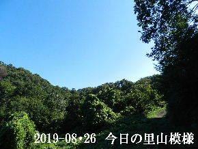 2019-08・26 今日の里山模様・・・ (6).JPG