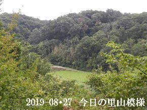 2019-08・27 今日の里山模様・・・ (4).JPG