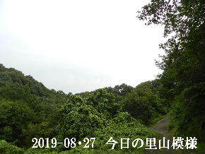 2019-08・27 今日の里山模様・・・ (6).JPG