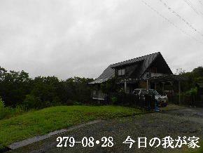 2019-08・28 今日の里山模様・・・ (1).JPG