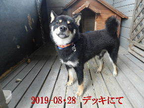 2019-08・28 今日の麻呂 (1).JPG