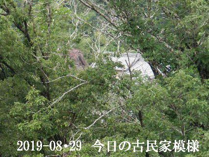 2019-08・29 今日の古民家模様.JPG
