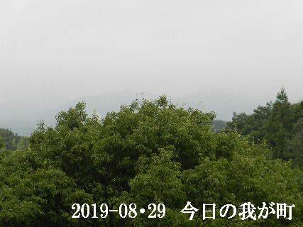 2019-08・29 今日の我が町.JPG