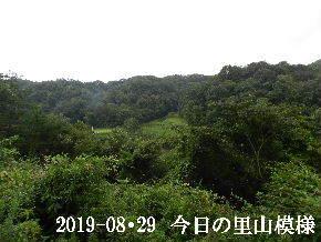 2019-08・29 今日の里山模様・・・ (3).JPG