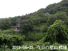 2019-08・29 今日の里山模様・・・ (6).JPG