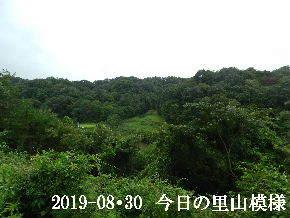2019-08・30 今日の里山模様・・・ (3).JPG