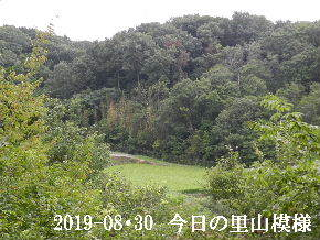 2019-08・30 今日の里山模様・・・ (4).JPG