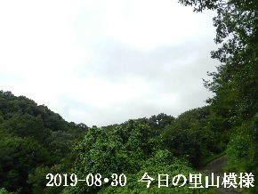 2019-08・30 今日の里山模様・・・ (6).JPG