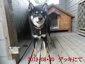 2019-08・30 今日の麻呂 (2).JPG