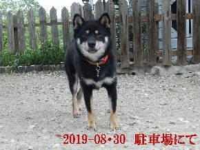 2019-08・30 今日の麻呂 (5).JPG