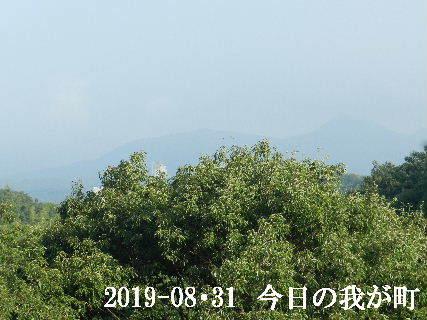 2019-08・31 今日の我が町.JPG