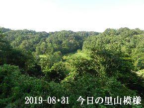 2019-08・31 今日の里山模様・・・ (3).JPG