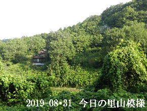 2019-08・31 今日の里山模様・・・ (5).JPG