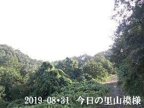 2019-08・31 今日の里山模様・・・ (6).JPG