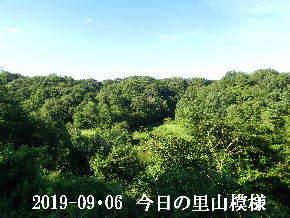 2019-09・06 今日の里山模様・・・ (3).JPG