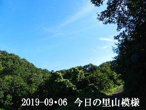 2019-09・06 今日の里山模様・・・ (6).JPG