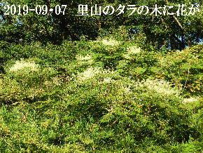 2019-09・07 今日の出遭い・・・ (1).JPG