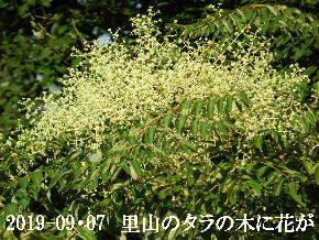 2019-09・07 今日の出遭い・・・ (2).JPG
