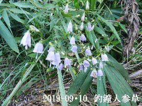 2019-09・10 今日の出遭い・・・ (1).JPG