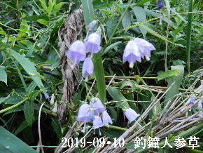 2019-09・10 今日の出遭い・・・ (2).JPG
