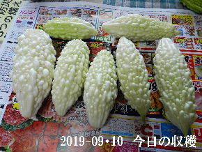 2019-09・10 今日の収穫・・・ (1).JPG