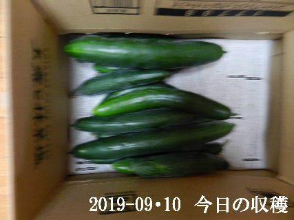 2019-09・10 今日の収穫・・・ (2).JPG