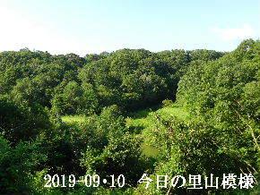 2019-09・10 今日の里山模様・・・ (3).JPG