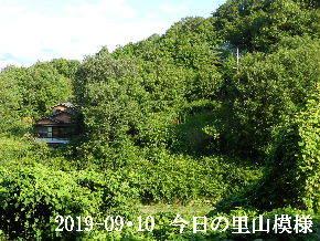 2019-09・10 今日の里山模様・・・ (5).JPG