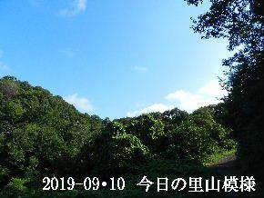 2019-09・10 今日の里山模様・・・ (6).JPG