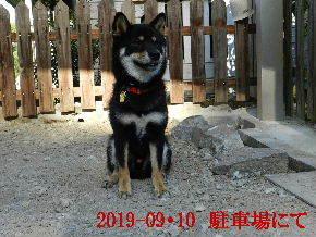 2019-09・10 今日の麻呂 (3).JPG