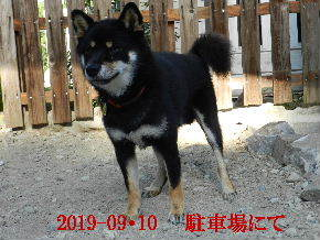 2019-09・10 今日の麻呂 (4).JPG