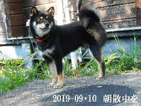 2019-09・10 今日の麻呂 (5).JPG