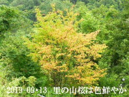 2019-09・13 今日の出遭い・・・ (1).JPG