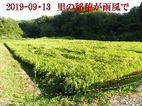 2019-09・13 今日の出遭い・・・ (10).JPG