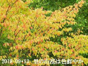 2019-09・13 今日の出遭い・・・ (2).JPG
