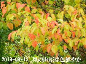 2019-09・13 今日の出遭い・・・ (3).JPG