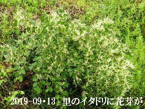 2019-09・13 今日の出遭い・・・ (5).JPG
