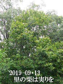 2019-09・13 今日の出遭い・・・ (6).JPG
