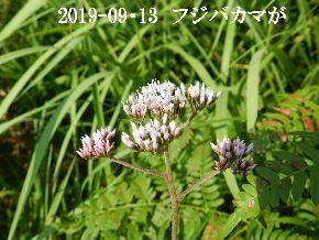 2019-09・13 今日の出遭い・・・ (9).JPG