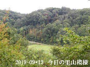 2019-09・13 今日の里山模様・・・ (4).JPG