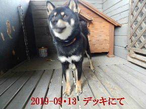 2019-09・13 今日の麻呂 (1).JPG