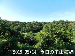 2019-09・14 今日の里山模様・・・ (3).JPG