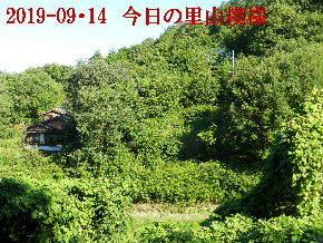 2019-09・14 今日の里山模様・・・ (5).JPG