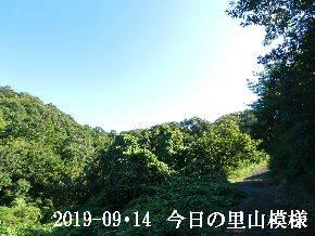 2019-09・14 今日の里山模様・・・ (6).JPG